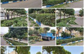 هرس درختان در فضای سبز شهرداری